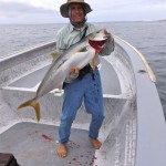 yellowtail fishing Cedros