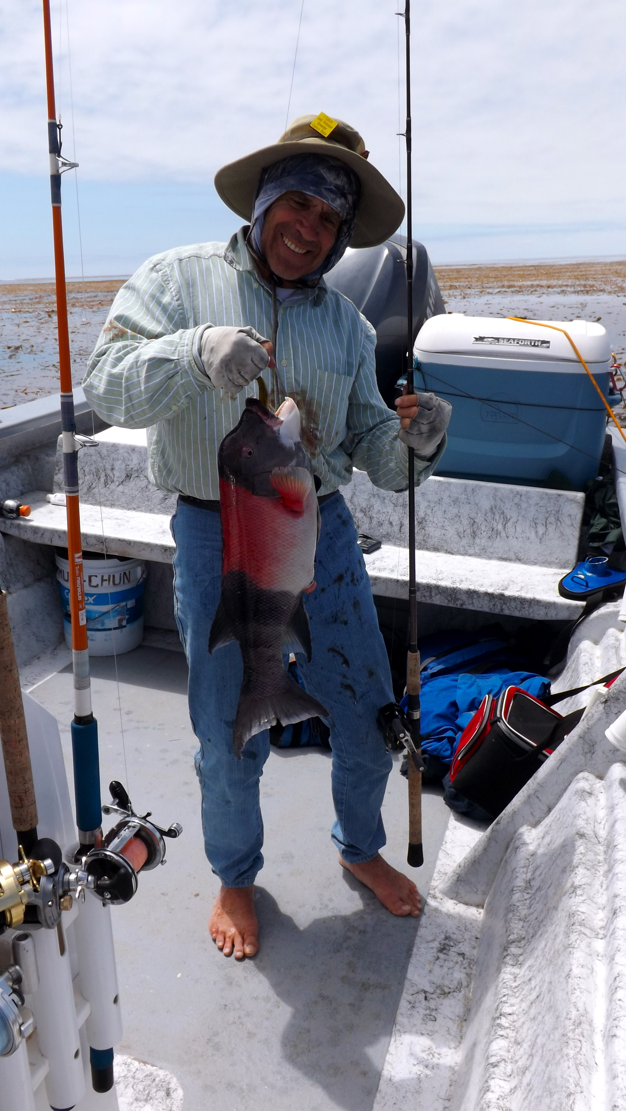 6 5 lb calico bass and more client fishing report for Island current fishing report