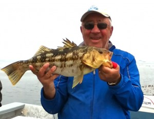 big calico bass Cedros island, Cedros Outdoor Adventures
