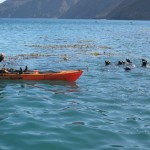 Kayak Fishing at Cedros Island 1