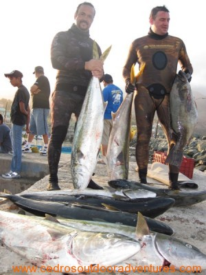 Cedros Island Spearfishing Photo Gallery